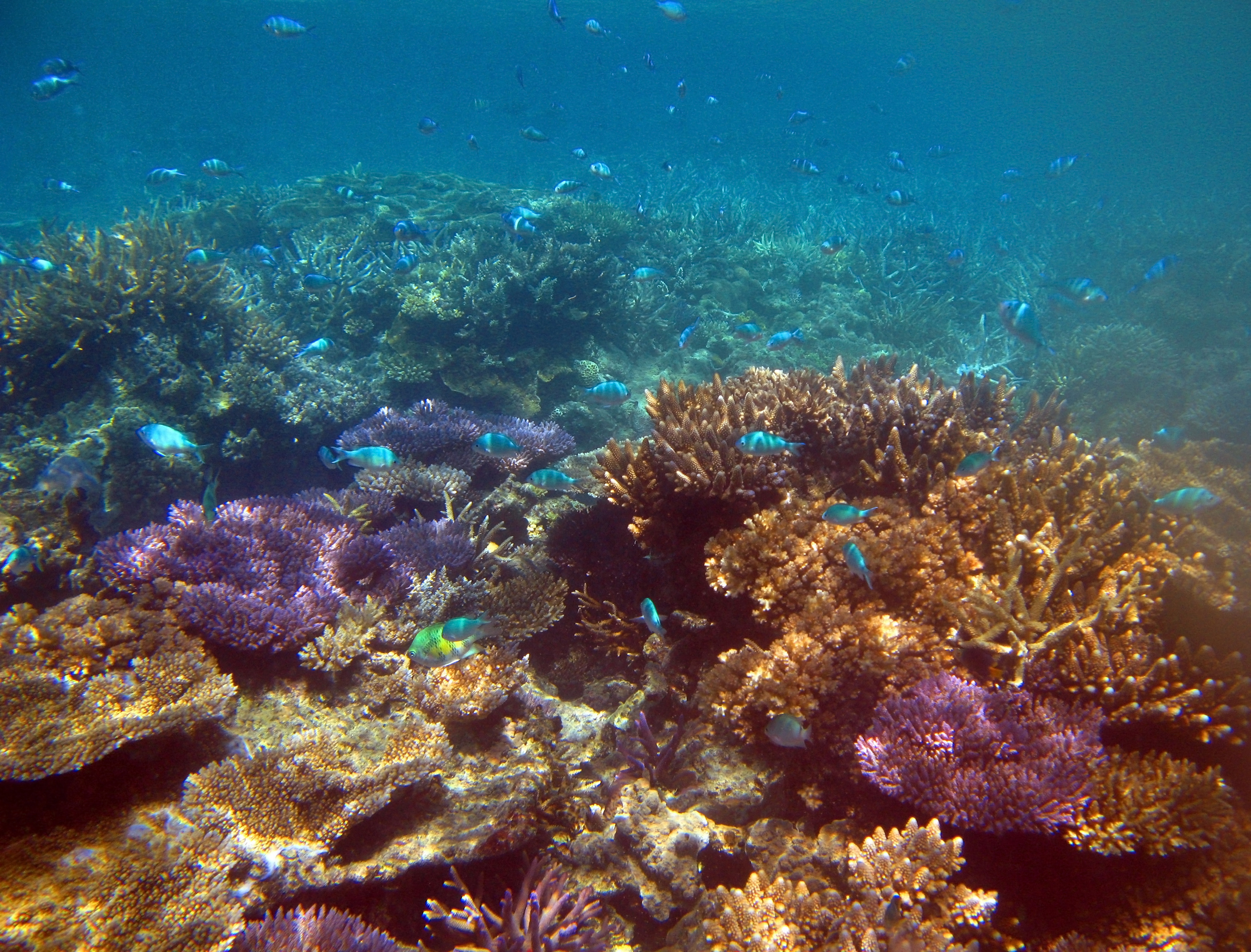 coral under the ocean pictures to pin on pinterest thepinsta
